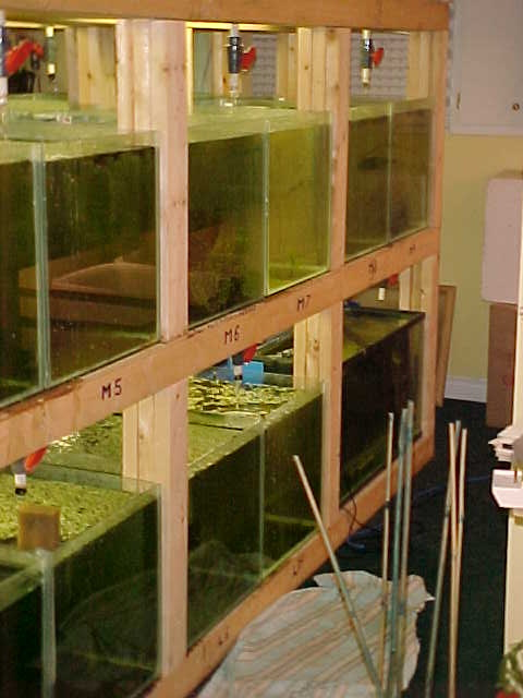 my fishroom